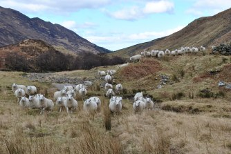 Glenshiel