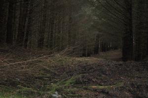 Glenelg-Ardintoul-Totaig walk (26)