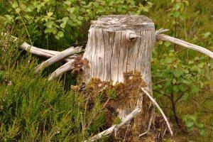 Glenelg-Ardintoul-Totaig walk (35)