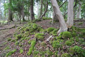 Druidenring Isle Maree