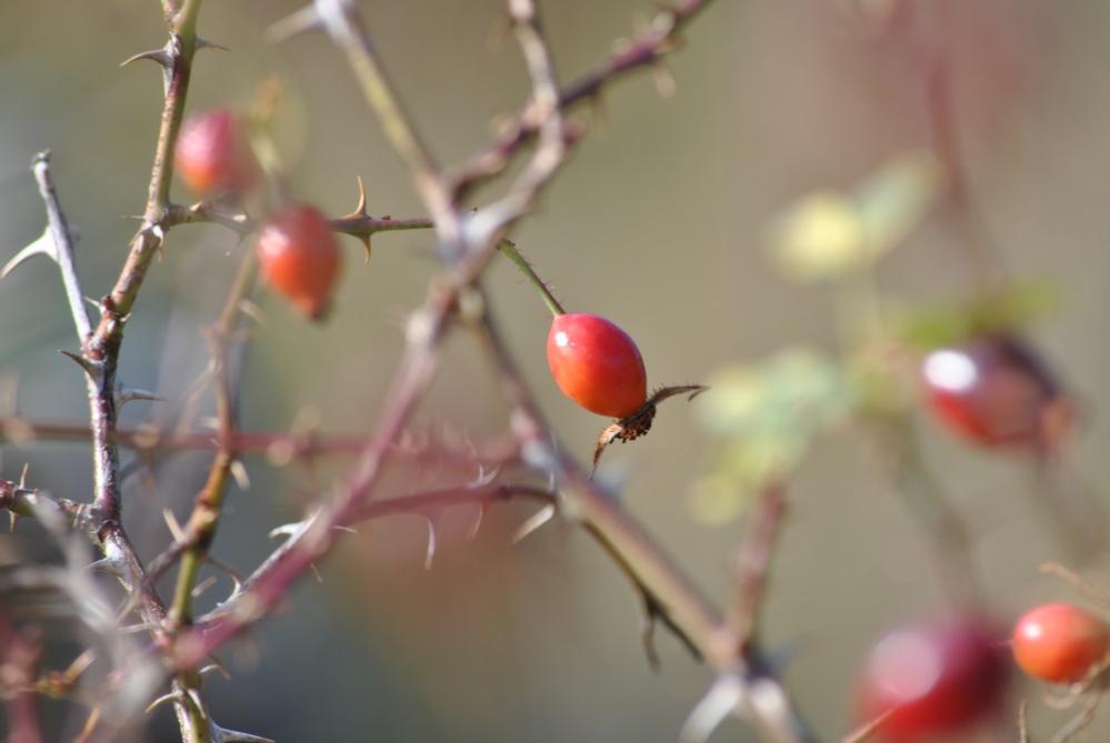 Herbst in den Highlands (5/6)