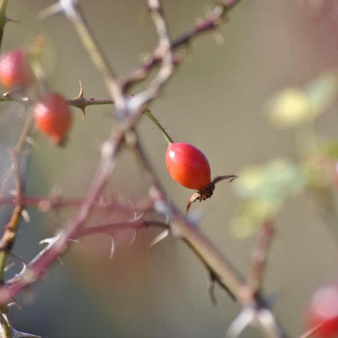 Herbst in den Highlands (2)