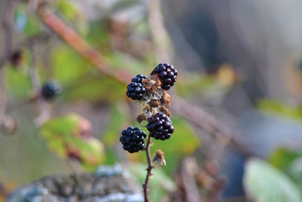 Herbst in den Highlands (2/6)