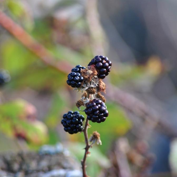 Herbst in den Highlands (3)