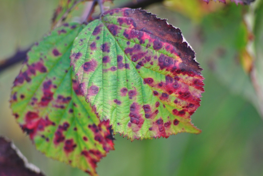 Herbst in den Highlands (4/6)