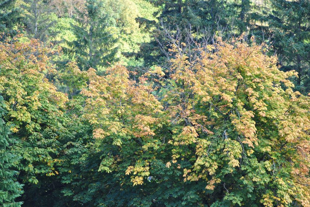 Herbst in den Highlands (6/6)
