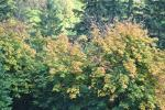 Herbst in den Highlands (5)
