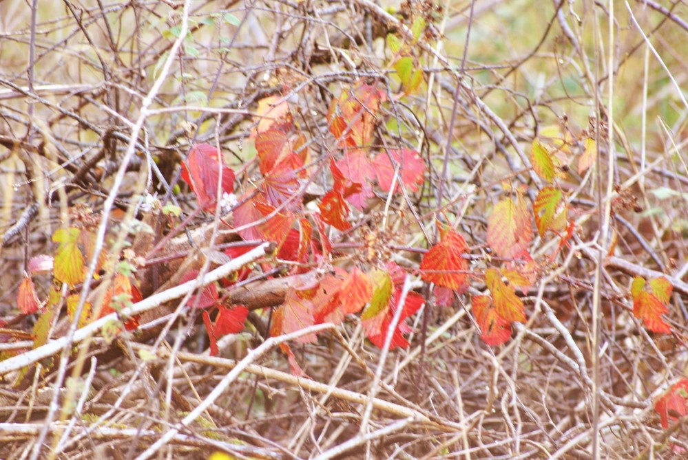 Herbst in den Highlands (3/6)