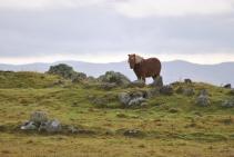 Shetland (9)