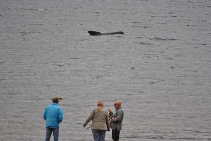 pilot whales (11)
