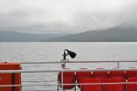 Sconser to Raasay (2)