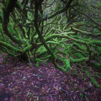 Schottland Foto Challenge - Isle of Skye von Antje Babendererde