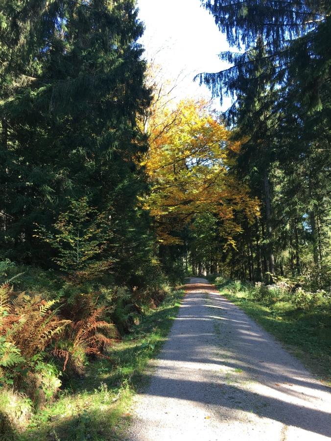 Schwarzwald Weg