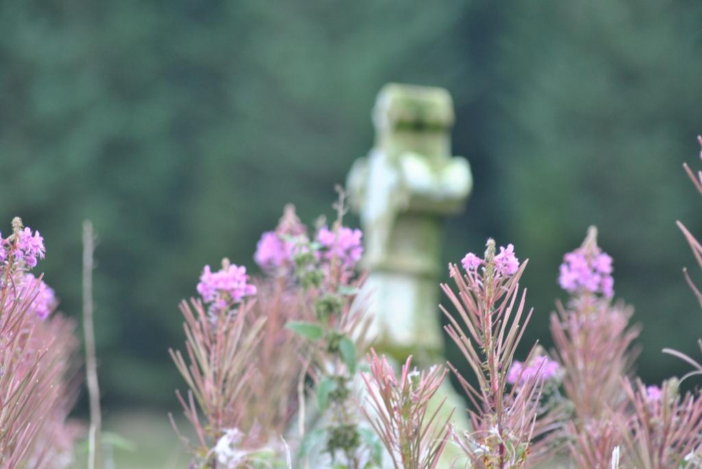 Weidenröschen und Grabstein Camster @nme Nellie Merthe Erkenbach Graveyards of Scotland
